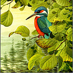 Norman Arlott - Kingfisher