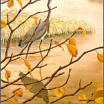 Norman Arlott - Louisiana Heron