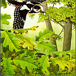 Norman Arlott - Great Spotted Woodpecker