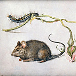 Jan Brueghel The Elder - A Mouse and a Rose