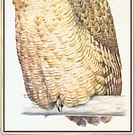 Peter Barrett - Eagle Owl