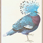 Peter Barrett - Victoria Crowned Pigeon
