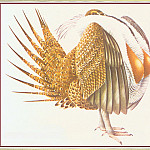 Peter Barrett - Sage Grouse