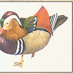 Peter Barrett - Mandarin Duck