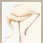 Peter Barrett - Flamingo