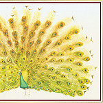 Peter Barrett - Peacock