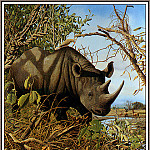 Craig John Bone - Plight Of The Black Rhino