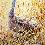 Birds 67 White-bellied Bustard, 2001 Robert Bateman Sqs, Robert Anning Bell