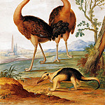 Johannes Bronkhorst - Two ostriches - anteater in landscape
