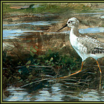 Roger Bansemer - Yellowlegs 1