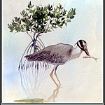 Roger Bansemer - Yellow Crowned Night Heron 1