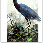 Roger Bansemer - Little Blue Heron 2 (adult)
