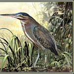 Roger Bansemer - Green Backed Heron 3