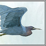 Roger Bansemer - Little Blue Heron 1