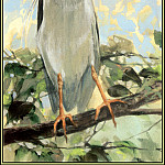 Roger Bansemer - Black Crowned Night Heron 2