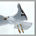 Roger Bansemer - Ring-Billed Gull 1