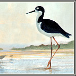 Roger Bansemer - D50-AWE106-RB-Dowitcher&Black_Necked_Stilt