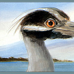 Roger Bansemer - Yellow Crowned Night Heron 3