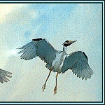 Roger Bansemer - Yellow Crowned Night Heron 2