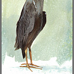 Roger Bansemer - Green Backed Heron 1