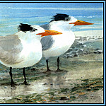 Roger Bansemer - Royal Tern 2(Winter)