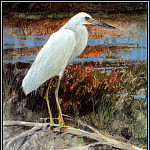 Roger Bansemer - Little Blue Heron 3(young)