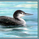 Roger Bansemer - Common Loon 2