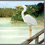 Roger Bansemer - Great White Heron 2