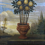 Orange tree in urn