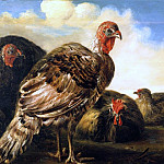 Aelbert Cuyp - Domestic Fowl