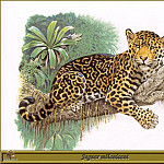 Robert Dallet - Jaguar mйlanisant