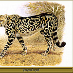 Robert Dallet - Guйpard royal