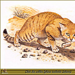 Robert Dallet - Chat des Sables phase tachetйe Sahara