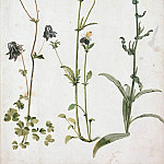 Albrecht Dürer - Columbine, Pansy, and Wild Bugloss