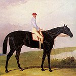 Hall_Harry_Ellinton_A_Dark_Bay_Racehorse_With_Tom_Aldcroft_Up, Том Холл