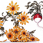 Black-eyed Susan & Radish, Susan Black