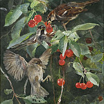 Sparrows in a Cherry Tree