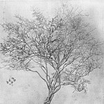 Leighton_Study_of_a_Lemon_Tree, Frederick Leighton