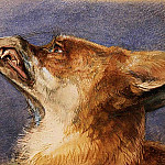 John Frederick Lewis - Head of a Fox