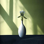 Robert Mapplethorpe - art 195