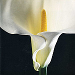 Robert Mapplethorpe - art 225