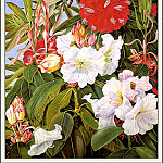 , Marianne North