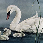 Sherry Nelson - Swan with Young