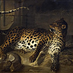 Leopard in a Cage confronted by two Mastiffs