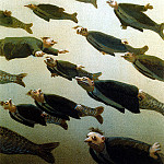 Михаэль Сова - Sa09 School of Fish MichaelSowa sqs