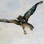 Hawk, Giovanni Battista Tiepolo