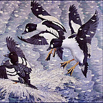 Charles Tunnicliffe - #43610
