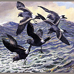 Charles Tunnicliffe - #43653