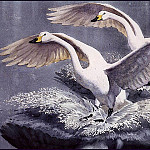 Charles Tunnicliffe - #43602