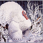 Charles Tunnicliffe - #43645